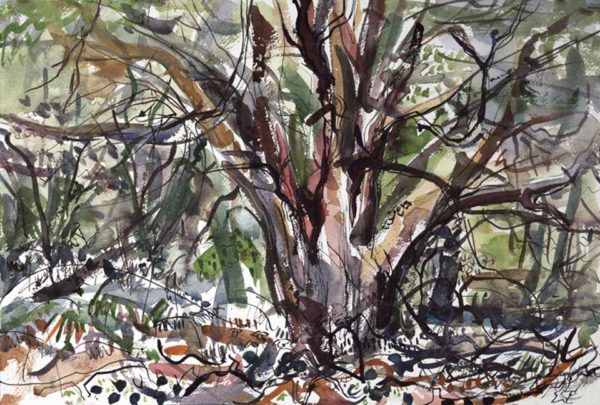 Dead Yew. Leigh woods – composition 2– 500mm x 370mm – Ink and Watercolour – £580 at The Dolby Gallery Oundle