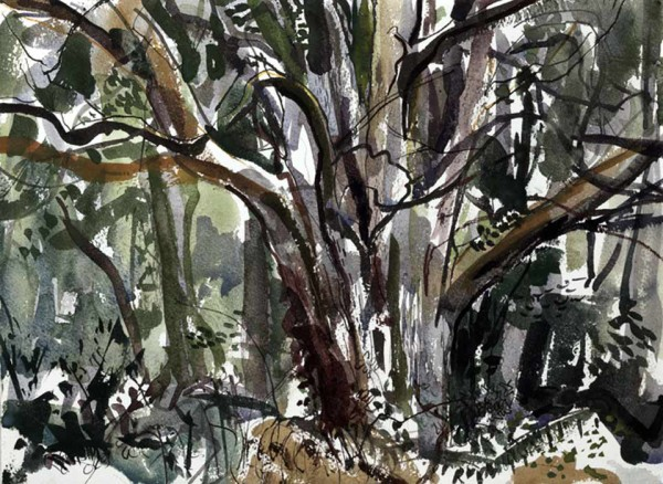 Dead Yew. Leigh woods – composition 1 – 355mm x 270mm – Ink and Watercolour – £580 at The Dolby Gallery Oundle