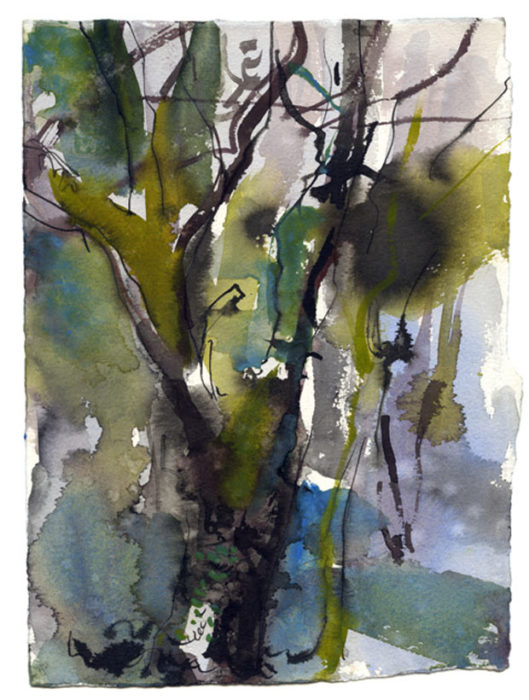 Oak woodland 2. Dinas 05.06.12 – 190mm x 280mm – Watercolour – £520 at The Dolby Gallery Oundle