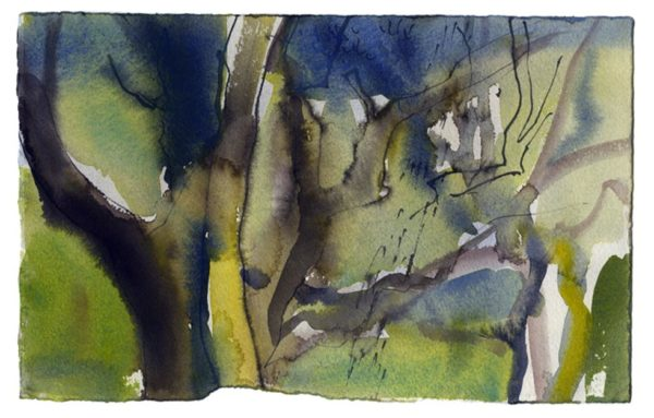 Oak woodland 3. Dinas 05.06.12 – 190mm x 280mm – Watercolour – £520 at The Dolby Gallery Oundle