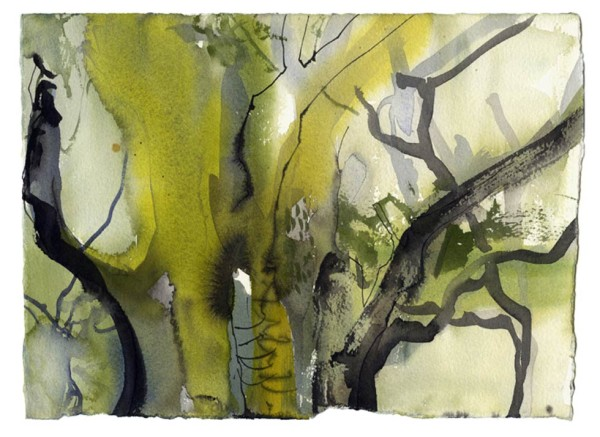 Oak woodland 4. Dinas 05.06.12 – 190mm x 280mm – Watercolour – £520 at The Dolby Gallery Oundle